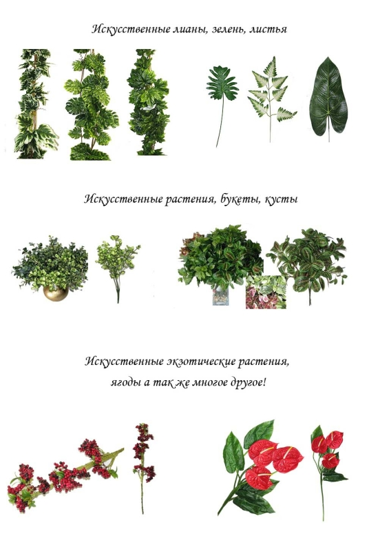 Растения названия и фото от а до я