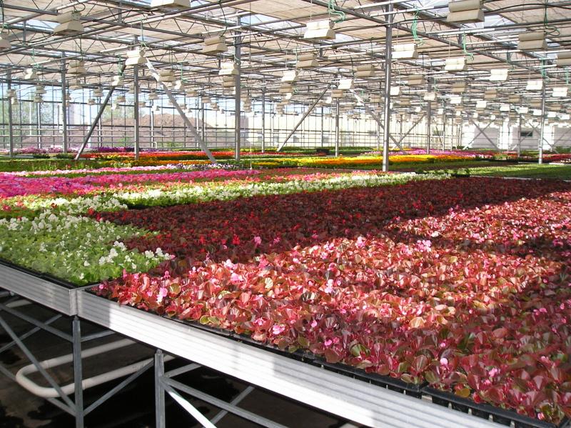 Рассада цветов совхоз московский цены 8