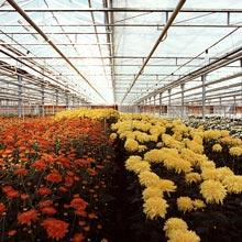 Где купить цветы в тепличном хозяйстве интернет доставка цветов саратов