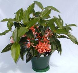 Горшечные цветы омск купить