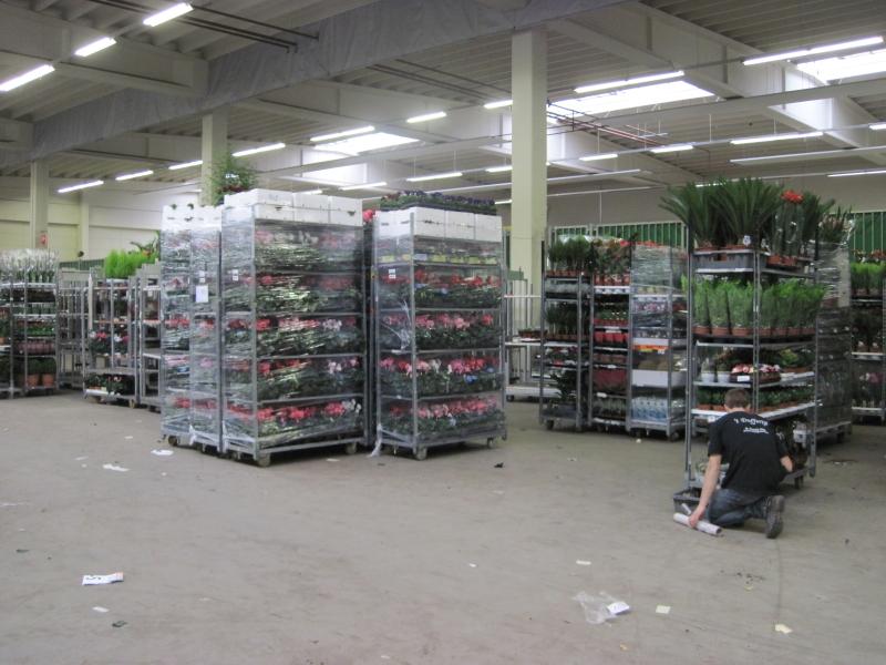 Флорекс - оптовая продажа цветов - Срезка и горшечные растения - Фотокаталоги компаний - GreenCom.ru