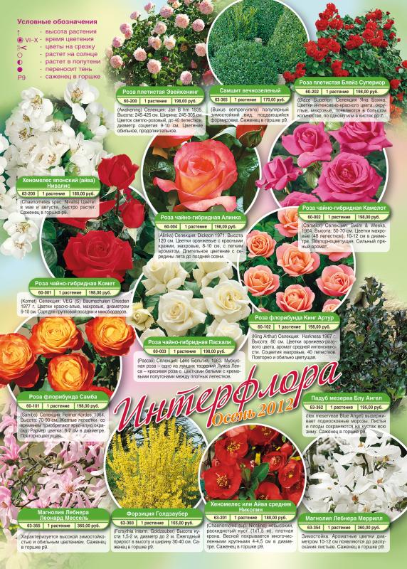 Предложение на осень 2012-розы e7be9a381c463