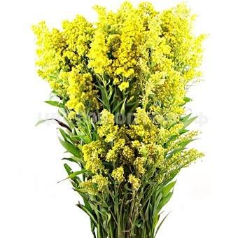 Цветы срезка оптом г. владимир — img 1