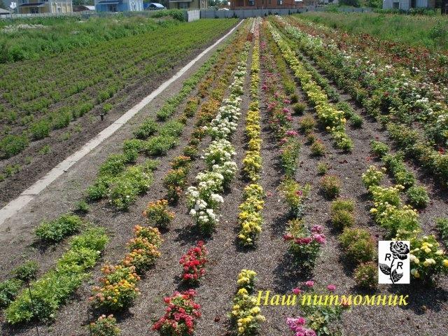 удаляет влагу питомник саженцев в днепропетровске сравнению