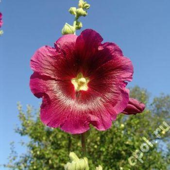 Прайс листы на цветы казахстана цветы обоях интерьере