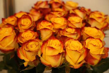 тутти фрутти фото роза